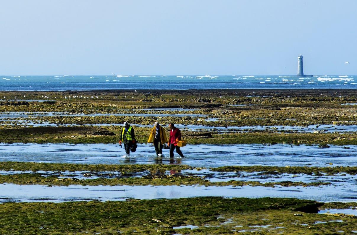 Découvrez la peche à pied sur l'île de Ré lors de votre sejour à St Clement des Baleines