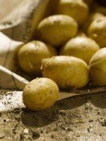Gastronomie ile de ré- dégustez les bonnes pommes de terres specialite de l ile de ré-Chambres d'hôtes Les Fillattes